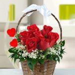 Sepette Çiçekler Kocaeli
