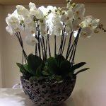 beyaz orkide kocaeli