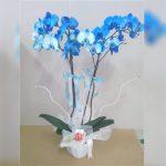 cift-dalli-mavi-orkide göksallar