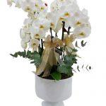 kadehte orkideler