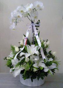 orkide arajmanı kocaeli