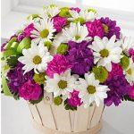 sepette kır çiçekleri kocaeli