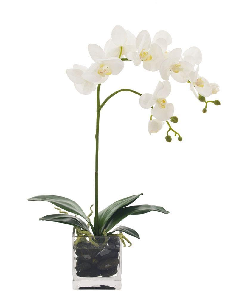 tek dallı orkide kocaeli