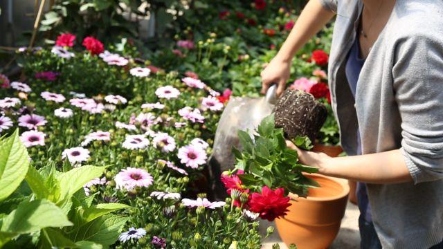 Photo of Çuha Çiçeği,Onbir ay Çiçeği
