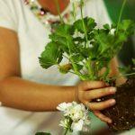 çiçek-bakımı-nasıl-yapılır