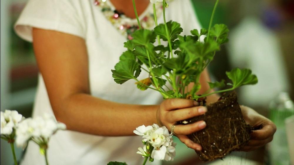 Photo of Çiçek Tohumu Ne Zaman Ekilir