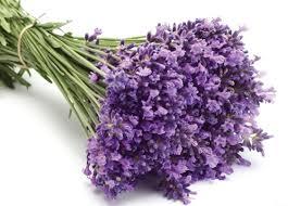 Photo of Çiçekler Ve Özellikleri