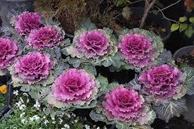 Photo of Kocaeli Mevsimlik  Çiçekleri
