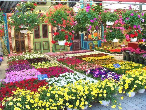 Kocaeli çiçek Çeşitleri